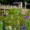 【福岡・観光】福岡市の花菖蒲が見れる名所一覧を確認してみよう!