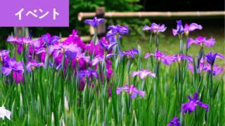 福岡の花菖蒲が鑑賞できる名所おすすめ一覧