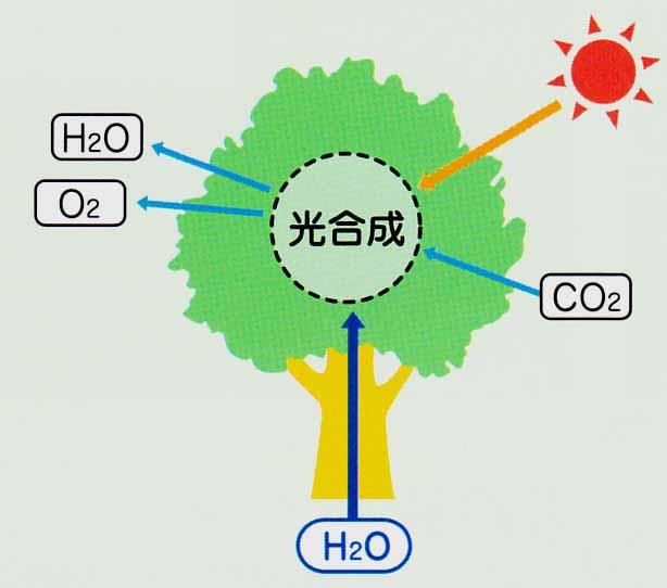 出典 www.kirinsou.com