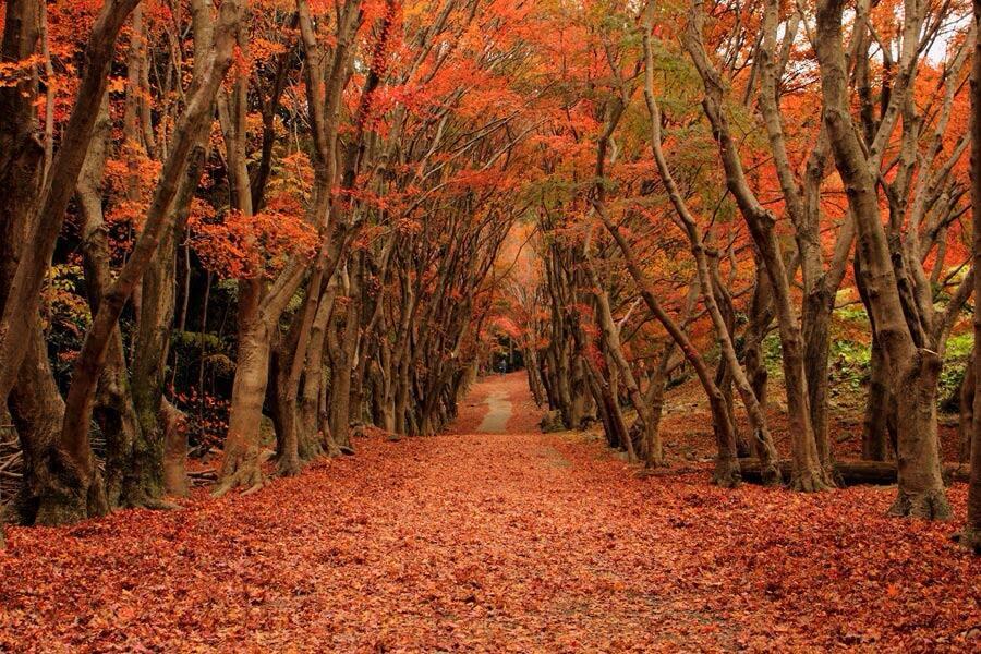 出典:find-travel.jp