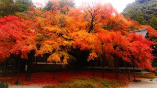 福岡の秋の紅葉スポット厳選3選!ランキング上位