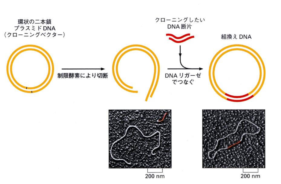 出典:www.tmd.ac.jp