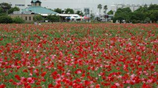 【福岡・おすすめの公園】筑紫野市総合公園はアスレチックスが目玉!