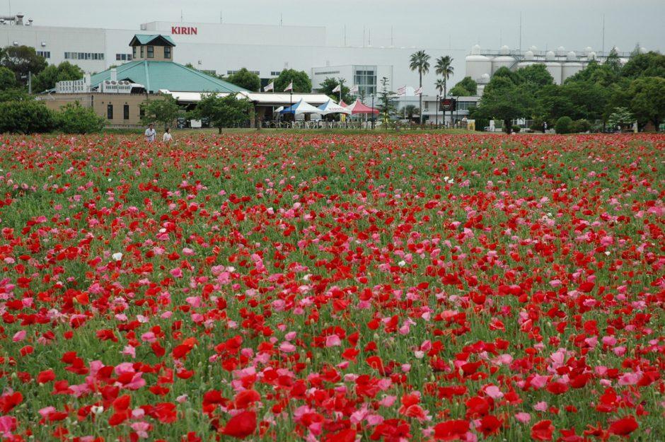 出典:www.city.asakura.lg.jp