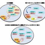 九州大学が細胞をがん化させる遺伝子GRWD1を発見!