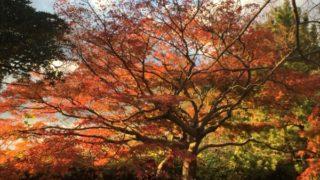 福岡のおすすめデートスポット!冬の福岡城を散策