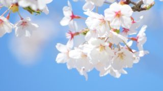 2017年福岡の桜の開花時期は?桜前線の北上時期