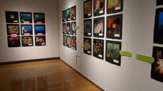 福岡の海ってっすっげー!!福岡アジア美術館で「ふくおかのうみ展」開催中