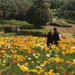 フェリーに乗って「のこのしまアイランドパーク」春の花を見に行こう!