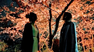 福岡の夜桜おすすめスポットまとめ