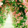福岡市植物園「秋のバラまつり2019」10月25日~11月10日開催