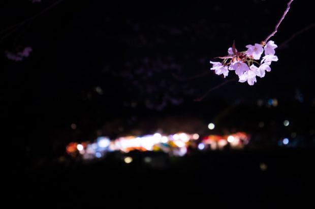 舞鶴公園の桜1