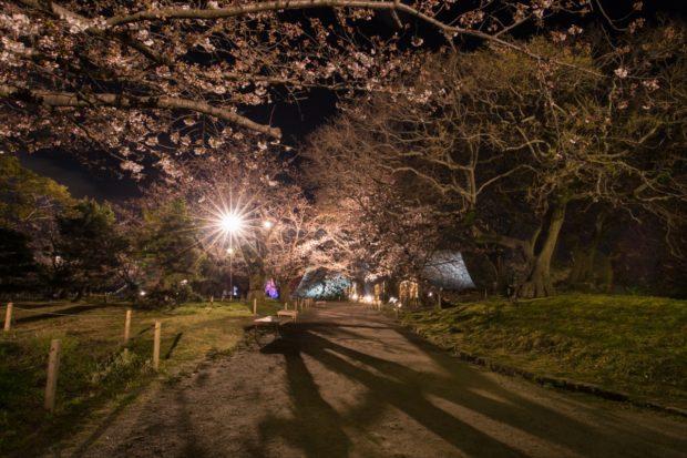 舞鶴公園の桜5