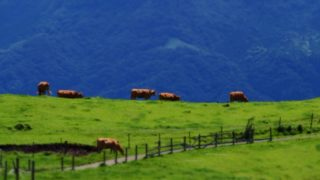 呼子へドライブ「杉の原放牧場」草原と海と牛と青空で癒される