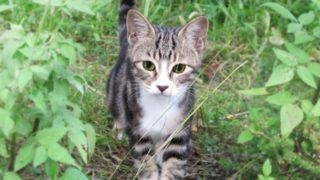福岡のら猫から感染で女性死亡!コリネバクテリウム・ウルセランス感染症とは