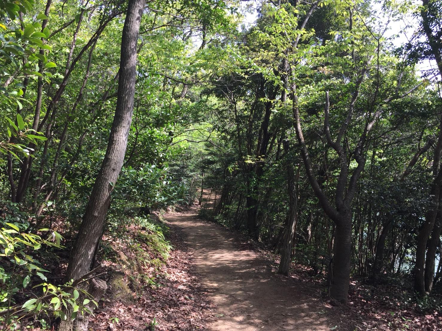 篠栗九大の森1