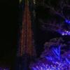 ももちのブルーライトクリスマスイルミネーション