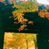 【朝倉】秋月城跡の紅葉スポット