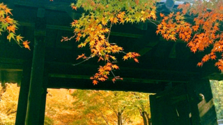 【福岡・朝倉】秋月城跡と周辺の紅葉スポット見どころランキング