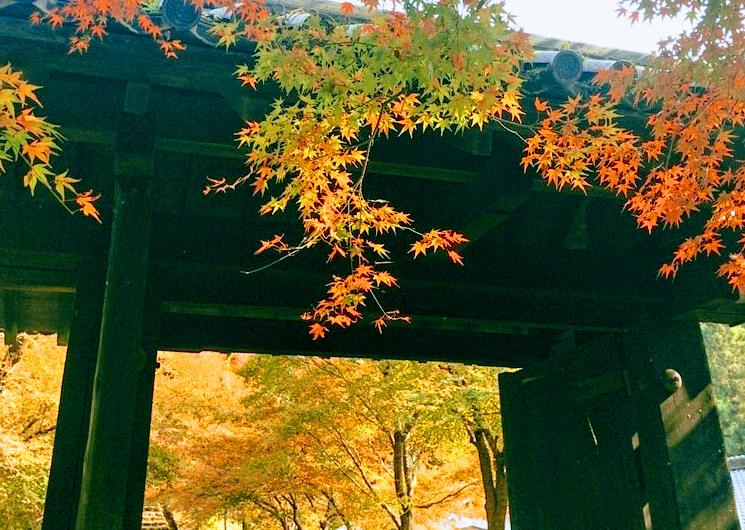 秋月城跡黒門