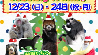 福岡市動物園のクリスマスイベント情報