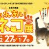 小倉井筒屋で「ふれあいネコ展」開催 40種60匹のネコと触れ合える