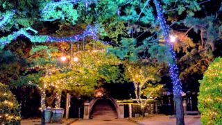 冬の大濠公園のウインター・クリスマスイルミネーション観賞スポット