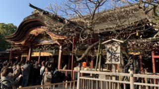 福岡の梅の名所「太宰府天満宮」飛梅と6,000本の白梅・紅梅