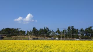 【糸島二丈】福ふくの里(道の駅)産直市場糸島食材を満喫 菜の花の名所でも有名