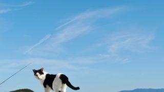 福岡の猫の島「相島」で『相島!春フェスタ2019』開催