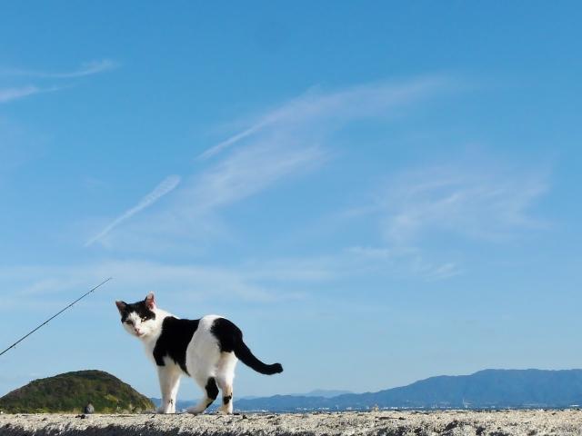 相島の猫1