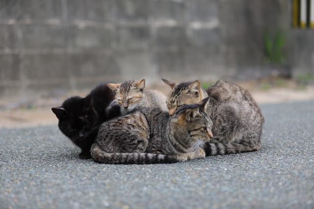 相島の猫2