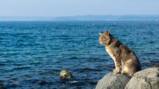 福岡県には猫の島が5つある!相島・地島・姫島・大島・玄海島