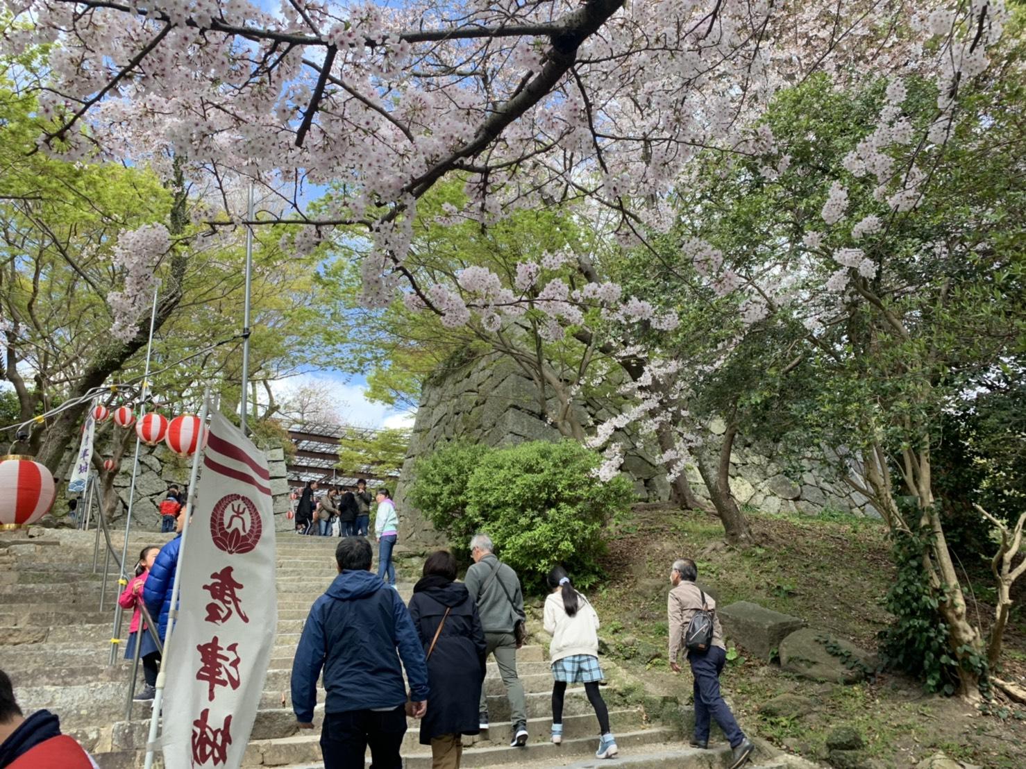 唐津城の階段の桜