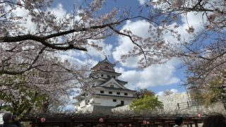 唐津城の石垣に生える満開の桜