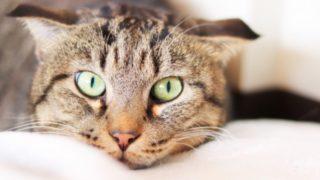 福岡市内の猫カフェ一覧2019年版|都会で猫に癒されたい!