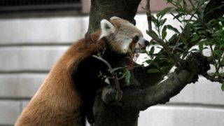 福岡にある動物園一覧