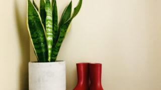 【大学受験用風水】観葉植物で勉強運を上げる方法