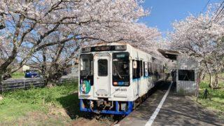 桜の駅として有名な松浦鉄道「浦ノ崎駅」桜のトンネルを列車がくぐる