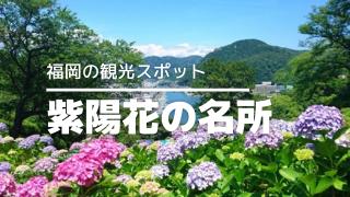 福岡の紫陽花名所サムネイル
