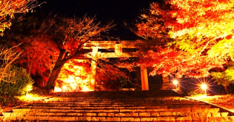 竈門神社ライトアップ